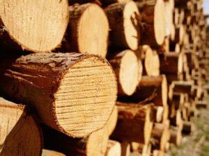 Закупка леса